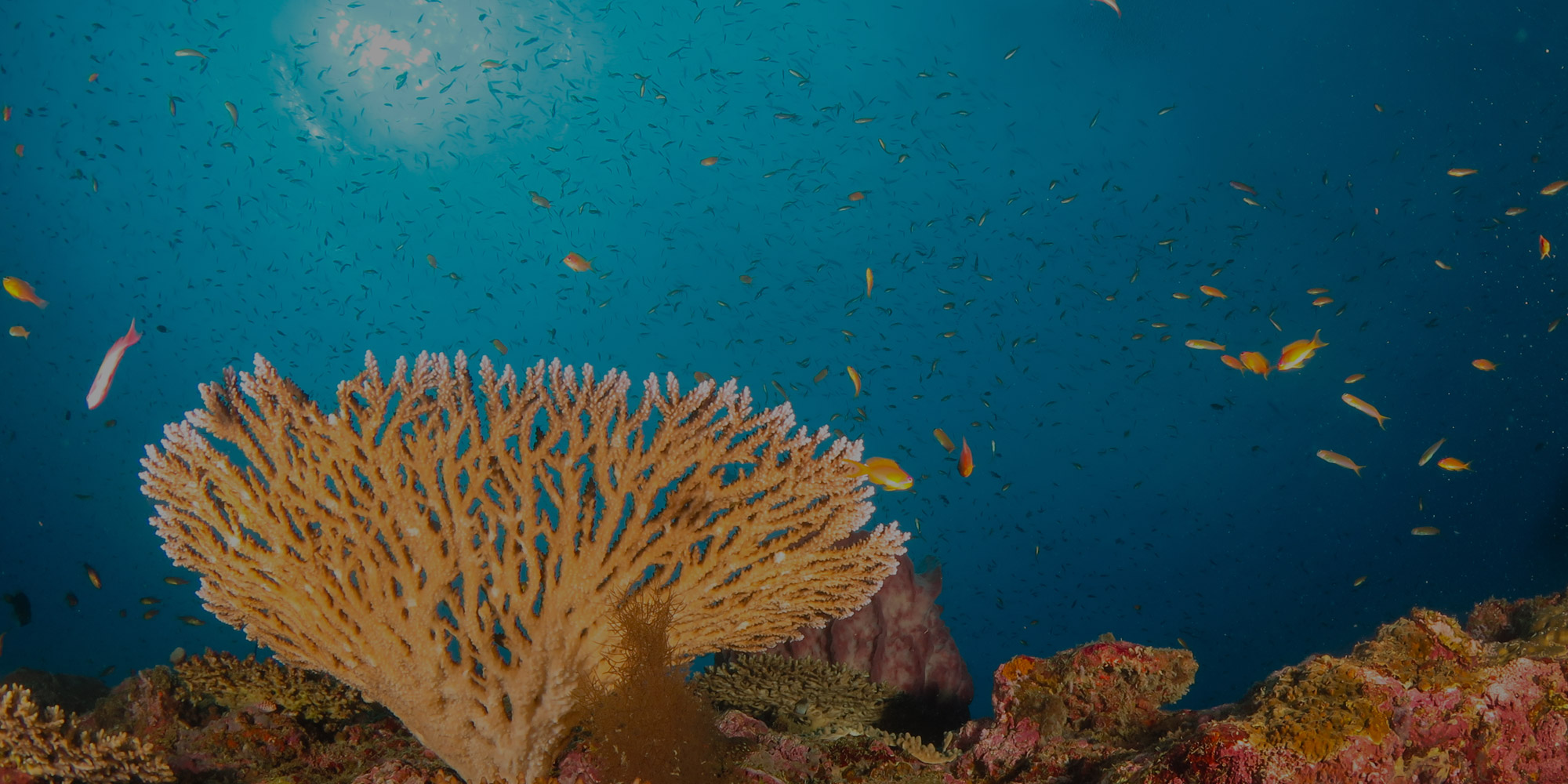 Dive Center Banner